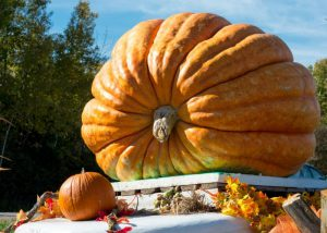 Image:  GIANT Pumpkin