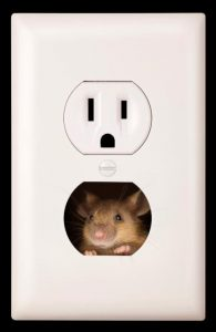 Image:  Mouse in Outlet to emphasize tight spots