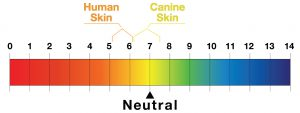 Image: pH value - human skin v canine skin